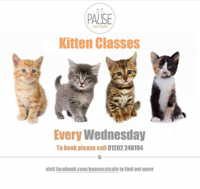 pause-cat-cafe-kittens-class-square