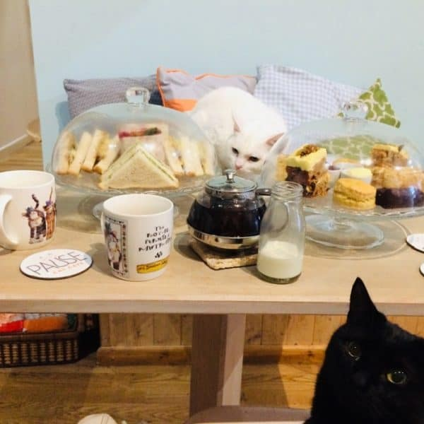High_Tea_Pause_Cat_Cafe