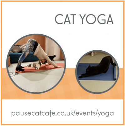 cat-yoga-Sq-pause-cat-cafe