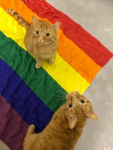 max and pumpkin pause's ginger cats celebrating their pride